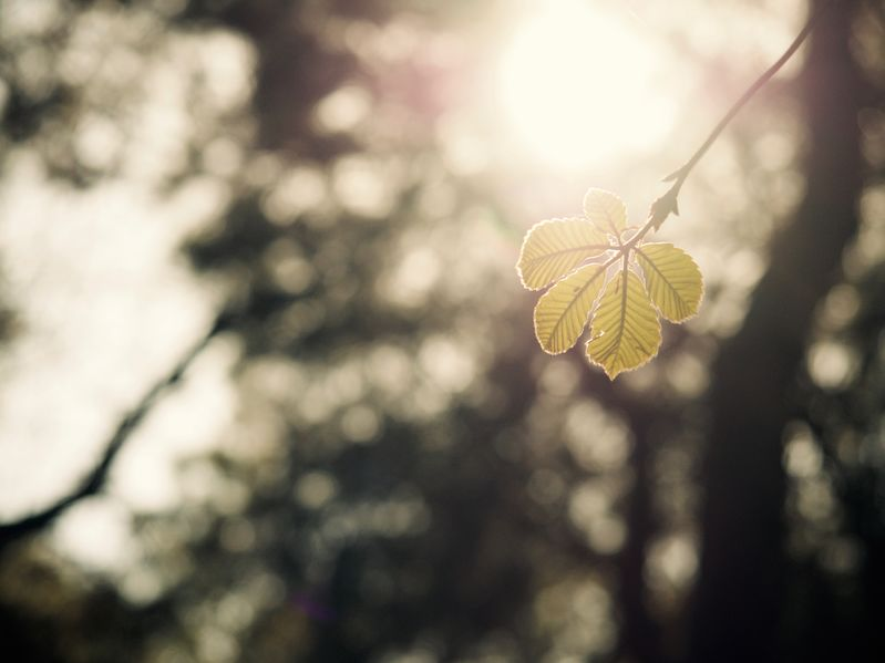 Photo of a Leaf - Newness